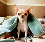 Pet friendly senior apartments in Carlsbad.
