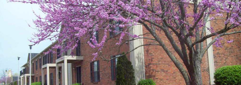 Flowers in bloom at apartments in Mt. Juliet