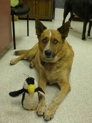 Dog and penguin friend