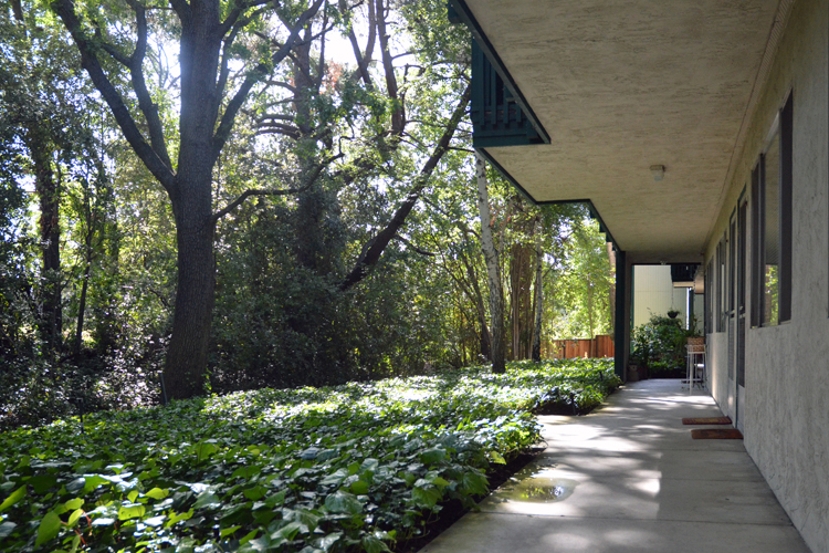 Lush grounds featured at Walnut Creek
