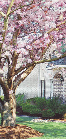Enjoy the ambiance of the pretty trees at apartments in Virginia Beach