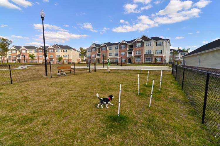 Dog park at Williamsburg Place