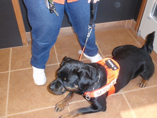 Service dog at the veterinarians office in Boise, ID