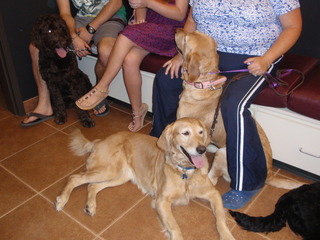 Golden retrievers at our animal hospital in Boise, ID