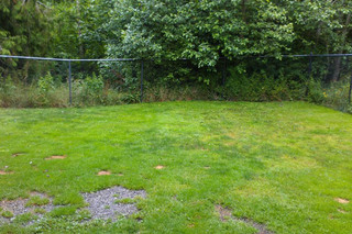 Dog yard at Port Angeles animal clinic