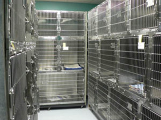 Cages for cat boarding at Andover pet resort