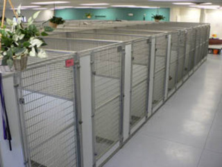 Dog runs at the pet resort in Andover