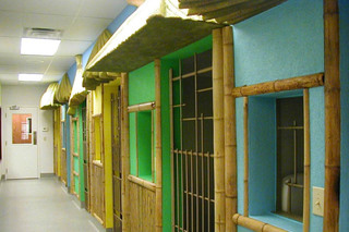 Tiki huts at the pet resort in Andover