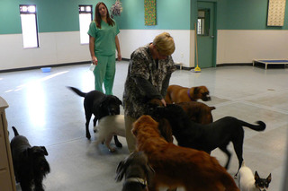 Dogs playing together at the Andover animal hospital
