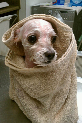 Dog after a bath at Fayetteville animal hospital