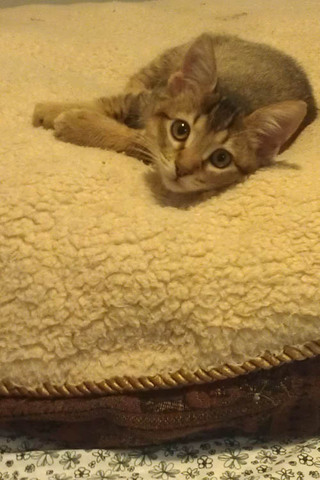 Little kitten big bed