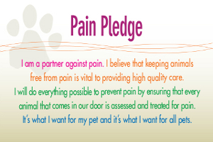 Pain Pledge