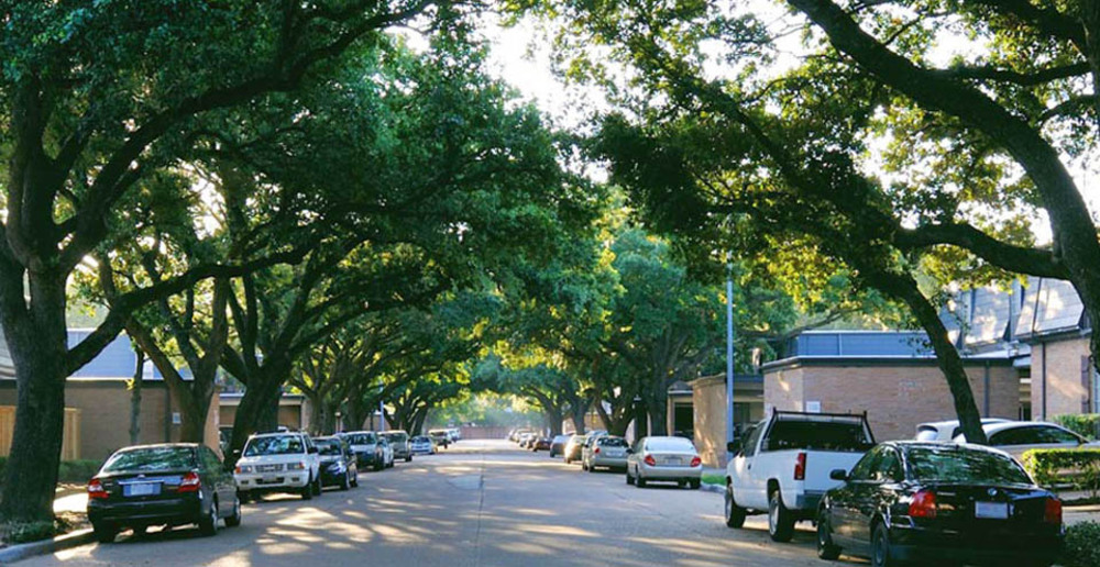 The trees at apartments in Houston create a beautiful street canopy