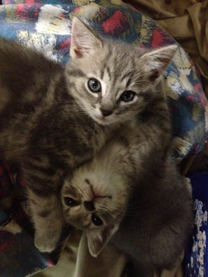 Declaw Your Cat in Fayetteville, NC