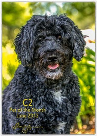 Pet of the month 1