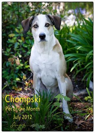 Pet of the month 2