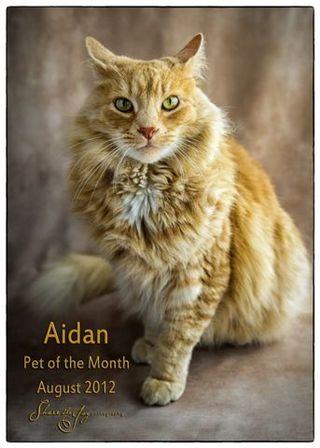 Pet of the month 3