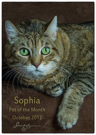 Pet of the month 5