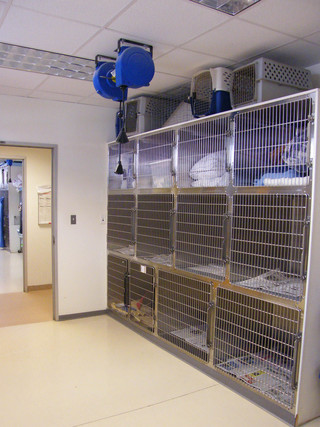The Chester animal hospital cat ward room