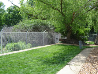 Yard and fence