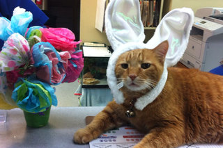 Easter at marion veterinary hospital