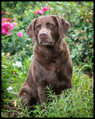 Spike august 2013