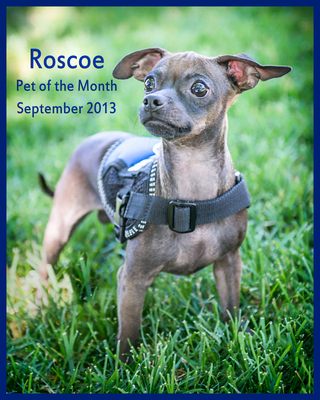 Roscoe september pet of the month