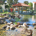 Thumb-apartments-santa-clara-ca-pond