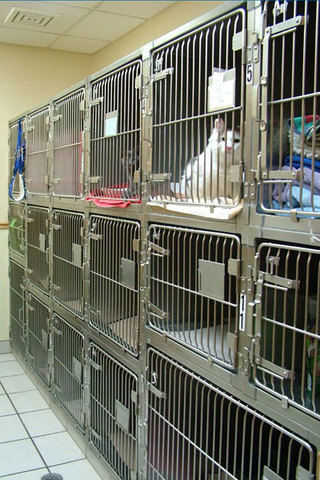 Animal hospital cat ward
