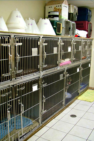 Dog ward at animal hospital in benton harbor