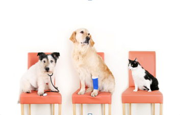 Laser Therapy for your pet in Churchville