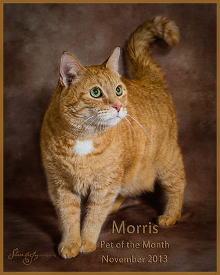 Morris pet of month