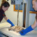 Cat xray in williamsport animal hospital