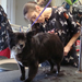 Pet grooming in williamsport
