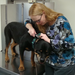 Vet examing a puppy in williamsport clinic