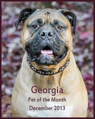 Pet of the month 12 13