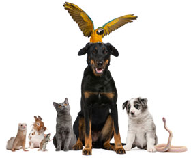 Learn more about pet friendly apartments in Branson
