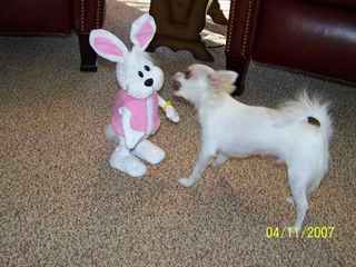 Chico celebrating easter