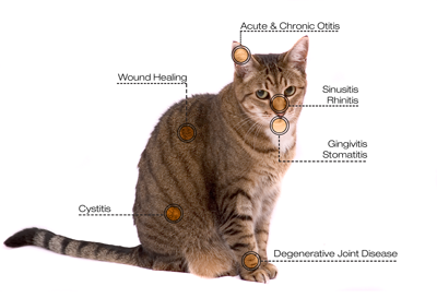 Laser Treatment for Felines at Galveston