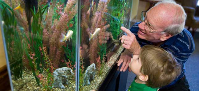 Kisco senior living aquariums