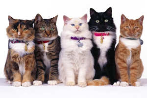 About the Memorial Cat Hospital in Houston