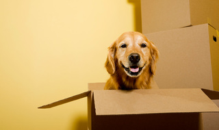 Happy houston dog box