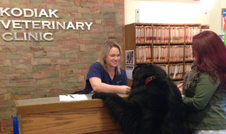 Kodiak animal hospital reception desk