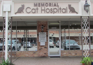 Welcome to our Cat Hospital in Houston, Texas