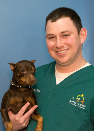 Male veterinary dog new york