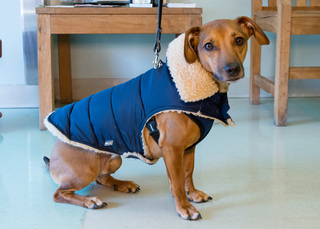 Happy dog in sweater