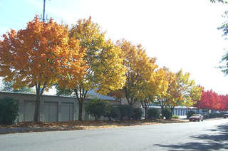 Fall season at self storage in vancouver