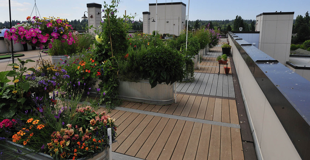 Rooftop apartment gardening in seattle