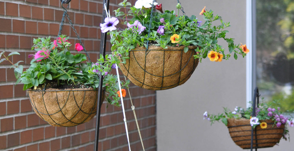Hanging baskets at kent senior apartment living