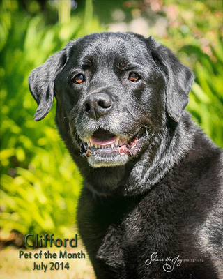 Pet of the month clifford